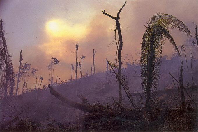 """Cena do documentário """"nas cinzas da Floresta"""" de John Adrian Cowell. Fonte: Base Search COC Fiocruz. Floresta amazônica em destaque."""