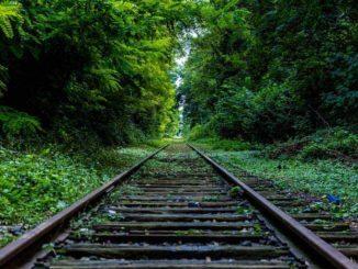 Modernização arriscada: doenças, epidemias e ciência em meio ao avanço do homem sobre a floresta 1