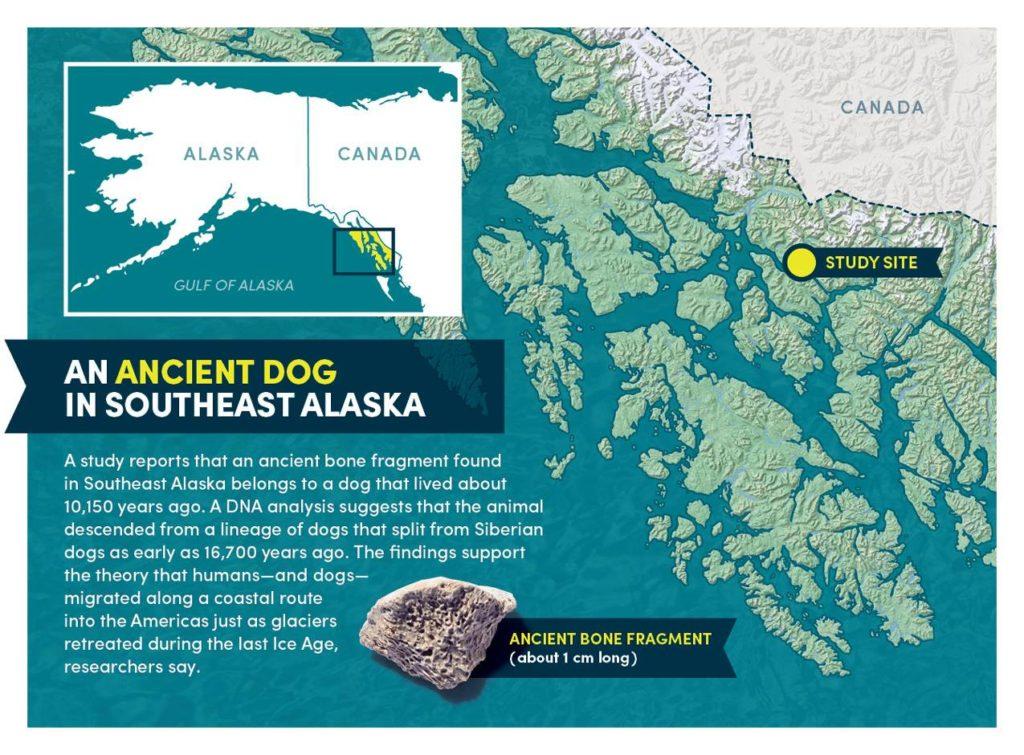 O cão mais velho da América revela novos dados da chegada do homem ao continente 2